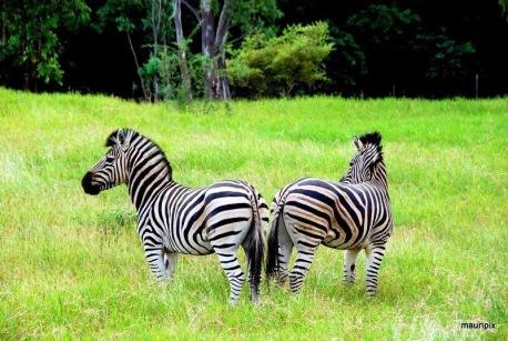 Casela Park Mauritius